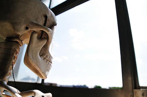鍼灸学生が勉強する解剖学について
