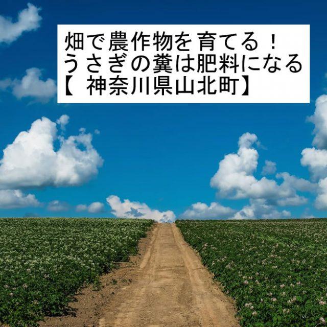 畑で農作物を育てる!うさぎの糞は肥料になる【神奈川県山北町】